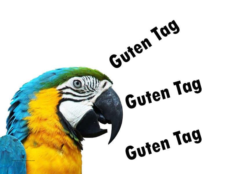 كيف-أتحدث-الألمانية-بطلاقة3